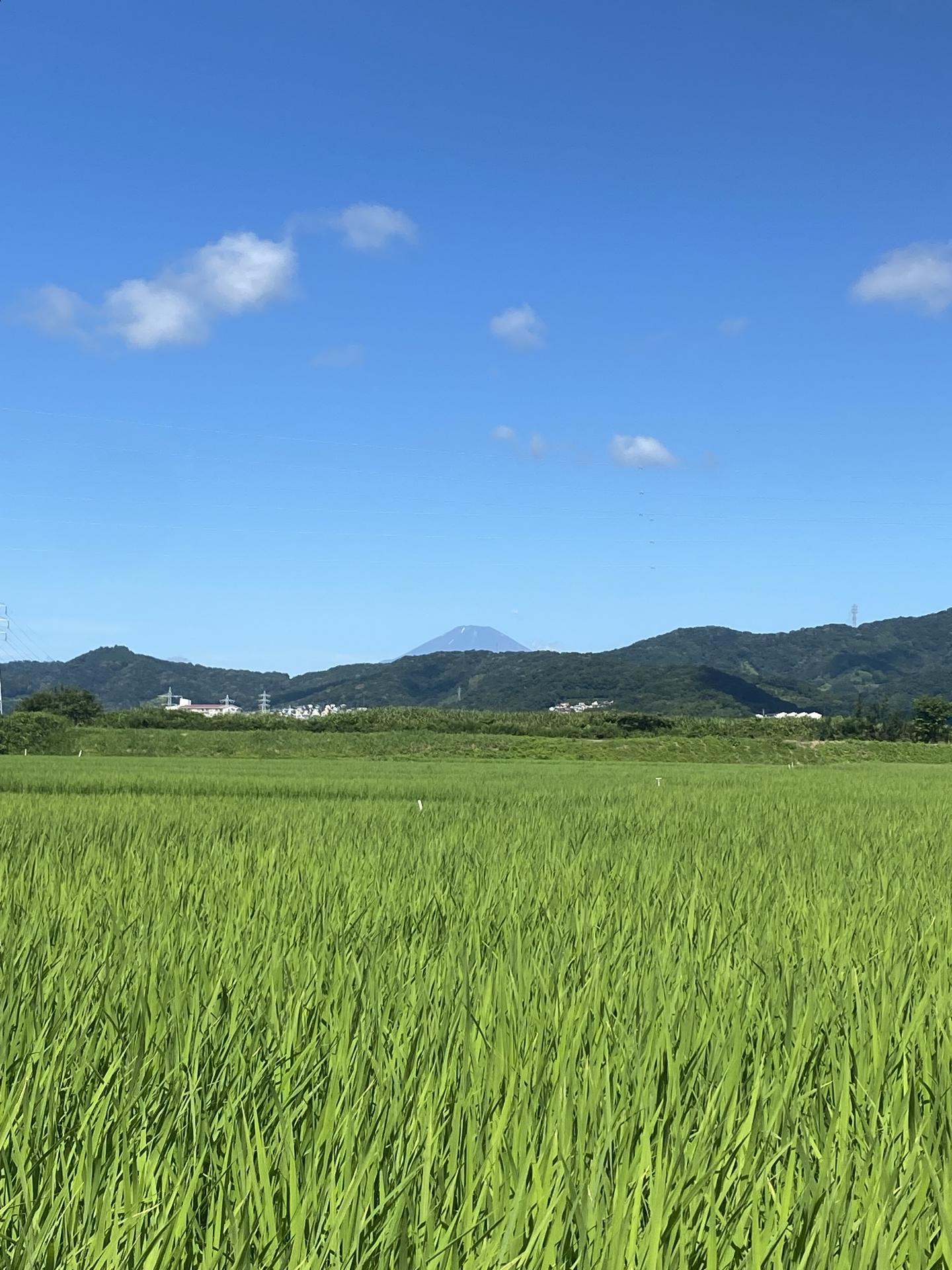 【427】 久しぶりに富士山が見えました